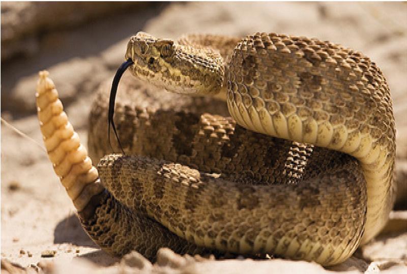 reptilesmexB13-F1