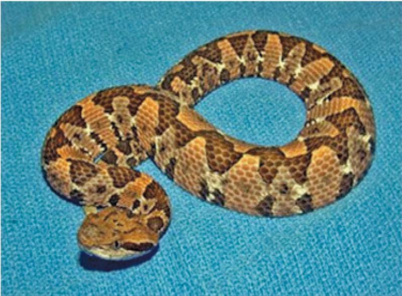 reptilesmexB13-F2