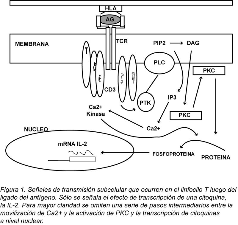 lupuseritemaB24-F1